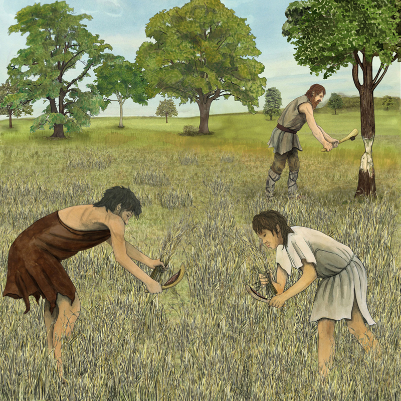 Neolithische Getreideernte und Fällen eins Baumes, Illustration