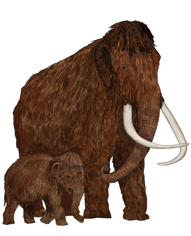 Mammut, mammoth, Illustration Silvia Nettekoven